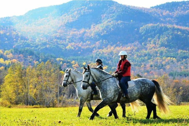 11Horseback riding, Kosanica