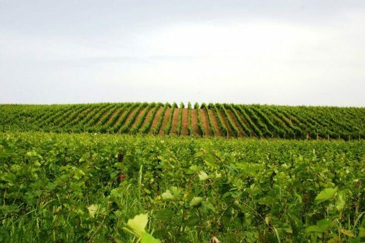11Kokomani vineyards Albania