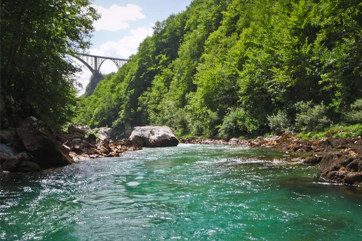 11Rafting Tara View Montenegro Adventure