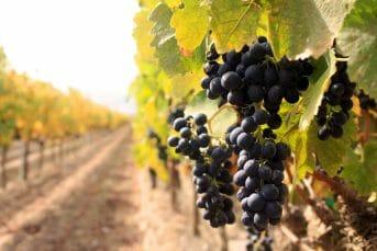 Wine route, Montenegro
