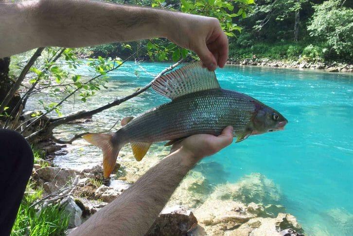 11Fly fishing adventure in Tara river