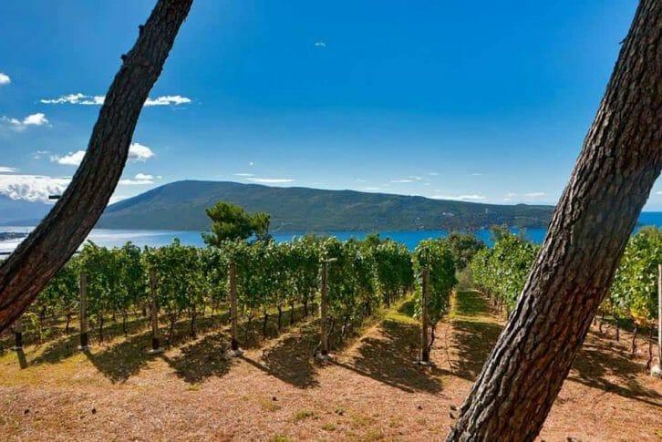 11Savina vineyard, Montenegro