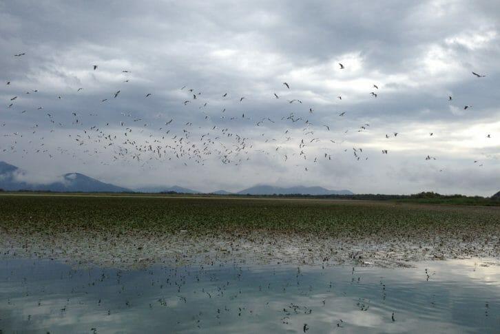 11Birds in flight on Skadar Lake
